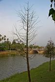 2013年10月生活:2013-10-18_枯樹