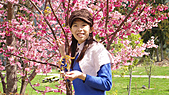 2011-02-20_武陵農場賞櫻行:陽光太強、眼睛都睜不開了@@