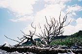 [Film 36] 日光 (日本)、瑞里 (嘉義)、南田 (台東):台東,南田,夫妻樹