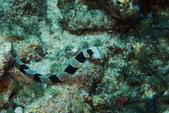 2015-05-16~17_小琉球之海龜看到膩:鰻