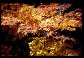[Film 4] 2014/11/25 福壽山:變形了...據說這叫正衝枝,拍的角度沒挑好就變這樣了 ><