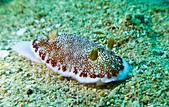 2014/11/01,02_意料之外的墾丁Fun Dive:蝸牛