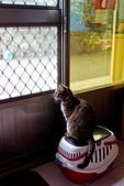 2014-02-03_(初四趴趴走) 鹿港(彰化) → 南港(南投):我阿姨跟姨丈都出門了,所以貓只能落寞的在等他們回來....