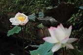 2014-07/10 & 08/15_新竹靜心湖:〔07/10〕立正!向左~~~看!