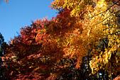 2014-11-25_福壽山賞楓:依舊拍不好的大景~