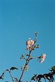 [Film 8] 2015年02 & 04月(霧台、北埔、曲冰、山腳、老梅):Natura + 柯達的底片,這個藍色還不賴