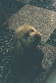 [Film 8] 2015年02 & 04月(霧台、北埔、曲冰、山腳、老梅):北埔麵店...一直盯著我們看的狗狗
