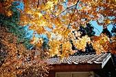 [Film 5] 2014年11月 ~ 2015年01月:2014-11-24_福壽山農場