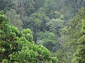 20090502 [台中]「大雪山森林遊樂區」之單人探險記:賞鳥平台的景色