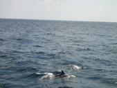 2011年09月生活:2011-09-24_我們被鯨魚包圍了!^^