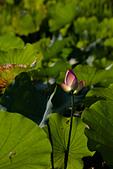 2014-07-06_台大安康農場:IMG_6888.jpg