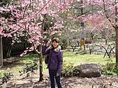 2011-02-20_武陵農場賞櫻行:行館週邊
