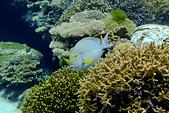 2016/1002~1004_沖繩 (X100S):沖繩美麗海水族館