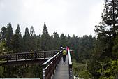 2013-03-22_阿里山森林遊樂區:櫻之道