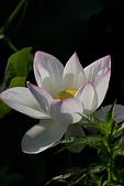 2014-07-19_觀音蓮花季:IMG_7669.jpg