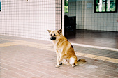 [Film 37] 2017年4月,小藍的第一次台東遊:古莊車站的守門員。總是有些狠毒心腸的人類。 幸好,牠們在車站裡找到了一個小小的世界存活。 2017-04-29