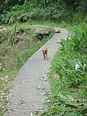 2010-09-30_瑞里印像區:本來以為這隻是來帶路了,結果他是來帶我們迷路的Orz