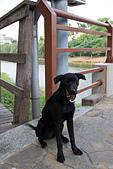 2013年10月生活:2013-10-18_跟著我們走的小黑狗~