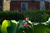 2014-07-12_竹北新瓦屋荷花池:荷花、古厝、電線桿。(雖然古厝還蠻醜的.....)