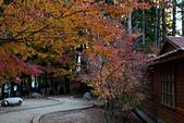 2014-11-25_福壽山賞楓:沒有光的松廬,所以才沒有什麼人~