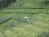 2010-09-30_瑞里印像區:所以害我們走到茶園裡去...