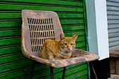 2015/02/18~23_我的農曆新年生活:〔2015-02-21 初三〕快『哭』出來的貓