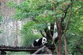 2013年02月_蛇年新春到處行:貓熊一天大約有17小時在睡覺