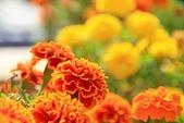 2012-10-15_南竿慢慢遊:嬌艷的花兒 @老頭將軍廟