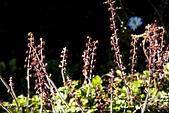 2013-03-22_阿里山森林遊樂區:生命力(水溝旁的小草)