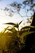 2013-08-04_淺水灣日出、福德水車公園、貝殼廟、三芝小豬:清晨的第一道陽光 @三芝鄉淺水灣