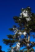 2014-01-01_美麗的中橫大冰箱:雖然豔陽高照,但樹上還是滿滿的冰塊