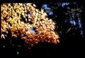 [Film 4] 2014/11/25 福壽山:完全糊掉......但光影真的很棒! 只是我在旁邊卡位等超久,沒想到拍失敗了,真是有股濃濃的哀傷~