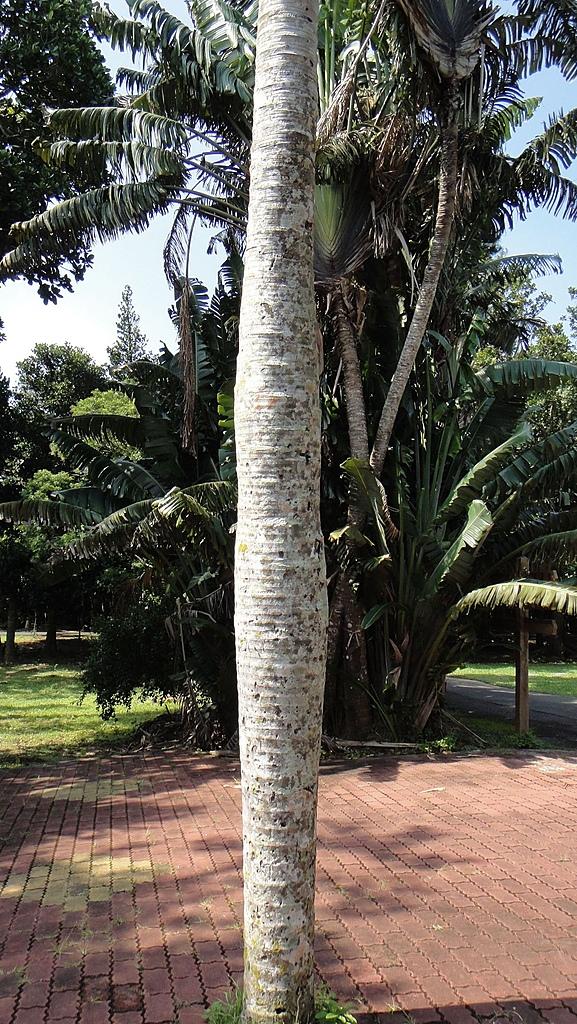 2010-10-29_我在墾丁*驚險不捨的第三四天:酒瓶椰子(請看它的肚子)