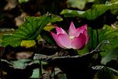 2014-07/10 & 08/15_新竹靜心湖:〔08/06〕陰雨中...唯一透光的短短五分鐘
