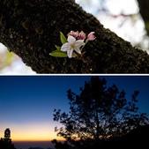2013-03-22_阿里山森林遊樂區:相簿封面