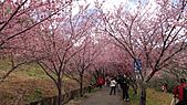 2011-02-20_武陵農場賞櫻行:休閒農莊第二區(等不到人少的時刻Orz)