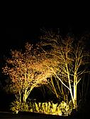 2011-02-20_武陵農場賞櫻行:夜櫻