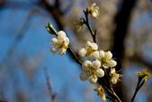 2014-01-18_清大梅園 & 平菁街42巷:IMG_2913.JPG