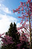 2014-03-10_阿里山拼命行:這張不知道在拍什麼,純粹表達當天『曇花一現的藍天』