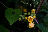 2014-09/28,29_武陵農場二日遊:愛心與黃色小花~