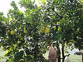 2010-09-30_瑞里印像區:柚子