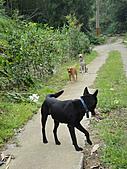 2010-09-30_瑞里印像區:結果那隻是來菬同伴玩的...