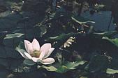 [Film 46] 2018下半年,植物園、烏嘎彥、大峽谷、油田農塘秀水龍騰、靜心湖:000023.jpg