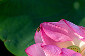2014-07-06_台大安康農場:這是蜜蜂的第二張