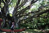 2014/06/28,29_小琉球&墾丁(陸地+海底):百年榕樹