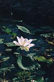 [Film 46] 2018下半年,植物園、烏嘎彥、大峽谷、油田農塘秀水龍騰、靜心湖:000026.jpg