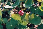 [Film 46] 2018下半年,植物園、烏嘎彥、大峽谷、油田農塘秀水龍騰、靜心湖:000029.jpg