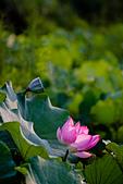 2014-07-06_台大安康農場:這個顏色實在很詭異,對比一拉高就變這樣.....