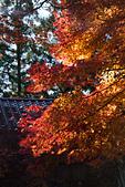 2014-11-25_福壽山賞楓:紅色、橙色、黃色