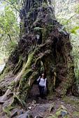 2013-03-22_阿里山森林遊樂區:漂亮的樹洞,襯出人的渺小